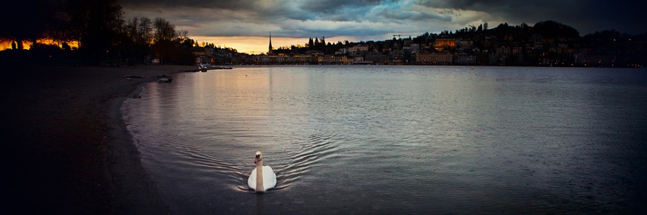 lucerne-swan