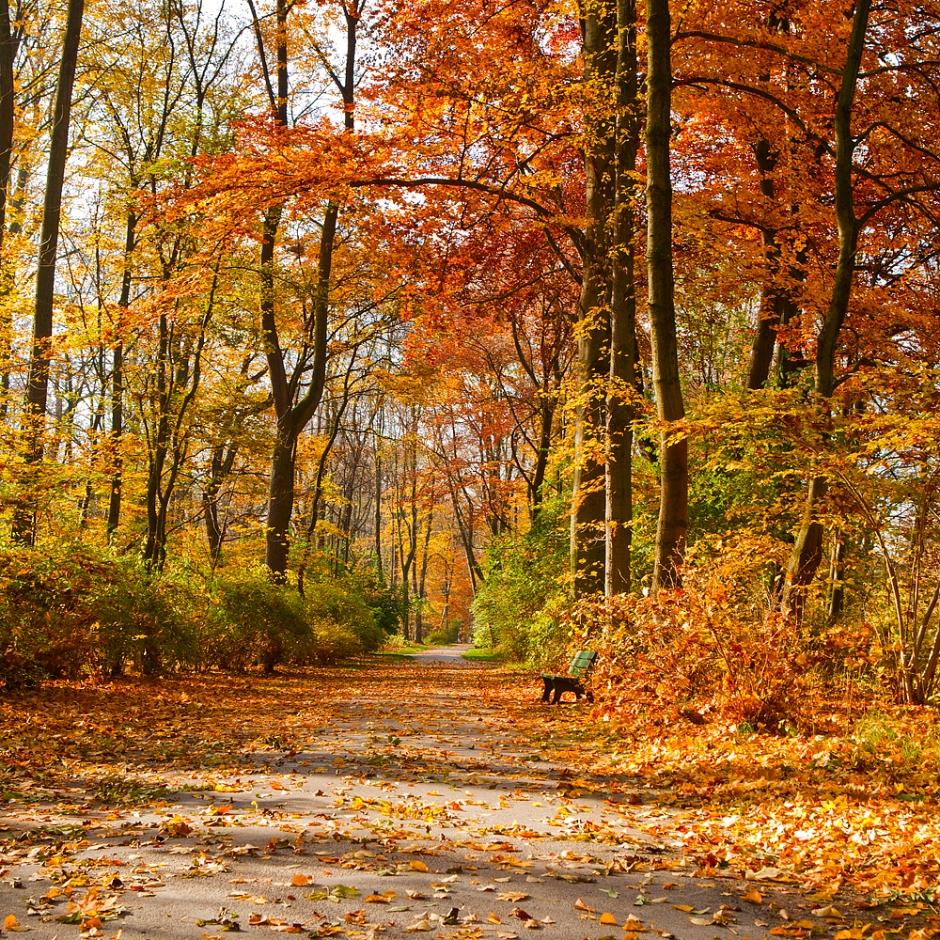 Munich Path